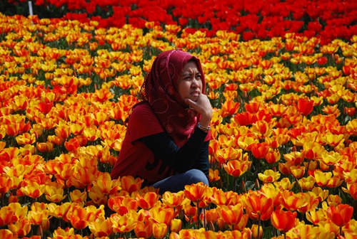 at one of the tulip fields in Lisse, The Netherlands
